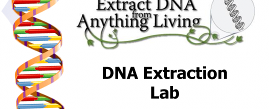 'DNA extraction using the 'sap extractor