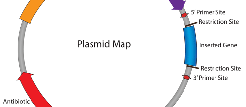 Isolation of Plasmid Inserts